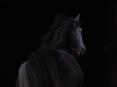 horse-943001_1280-e1513287421635.jpg