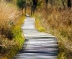wooden-track-1932611_1280-e1533061288957.jpg